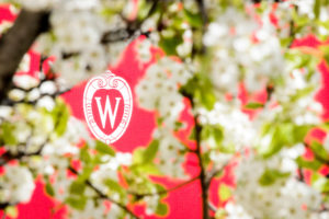 A W crest is pictured surrounded by the spring blooms of an ornamental pear tree along University Avenue at the University of Wisconsin-Madison on April 24, 2017. (Photo by Bryce Richter / UW-Madison)